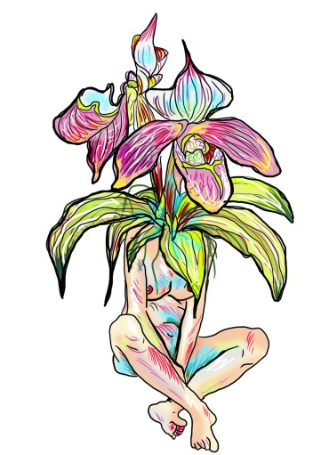 meditative orchids